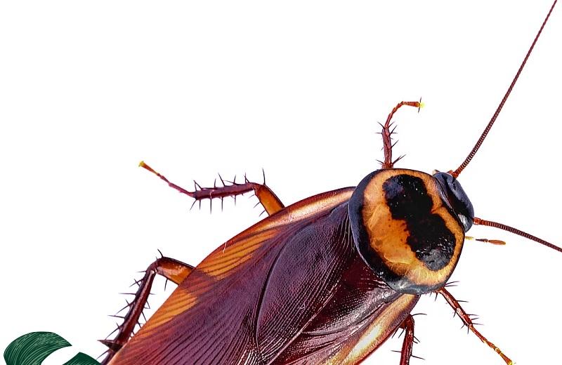 Per San Valentino puoi dare il nome del tuo ex a uno scarafaggio