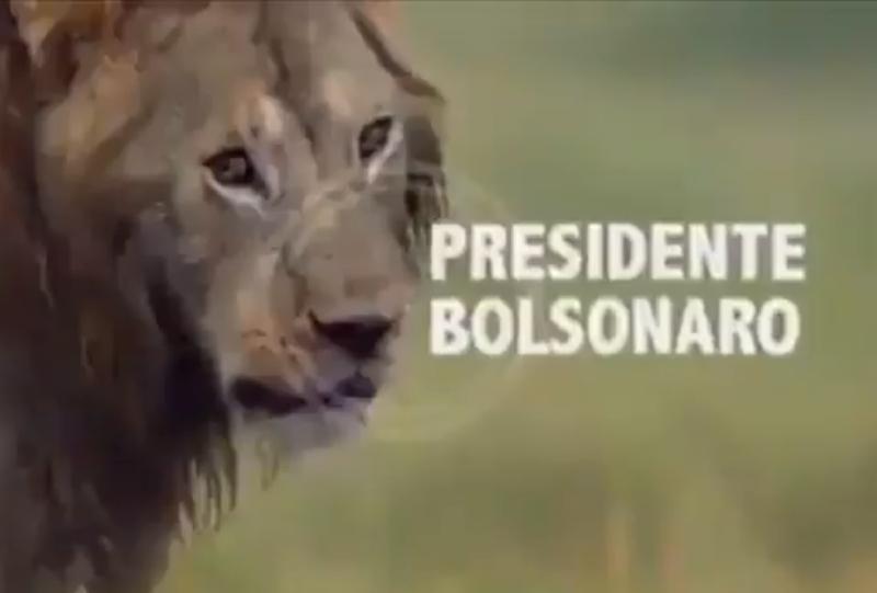 Bolsonaro si sente come un leone attaccato dalle iene LGBT e femministe